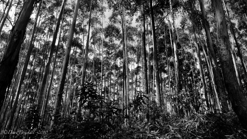 forest of ella rock path sri lanka
