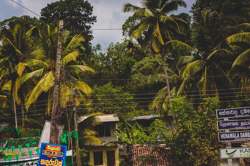 Sri Lankan Countryside