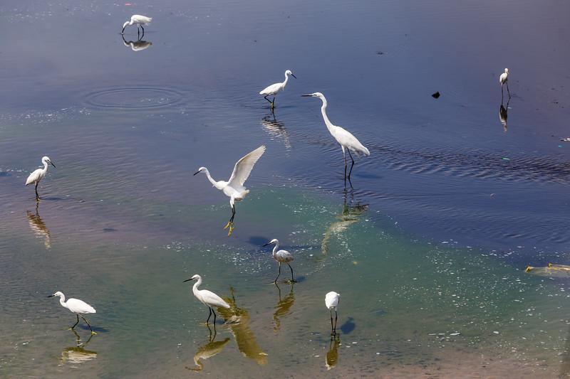 Beira Lake Estuary