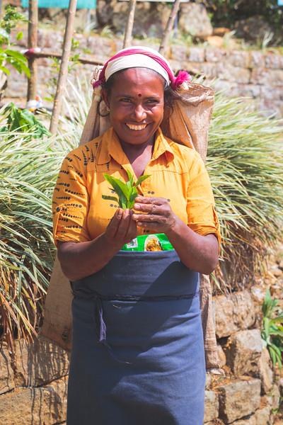 One of the works from Nuwara Eliya's tea fields