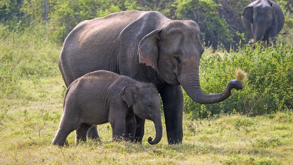 Top 10 Things to do in Sri Lanka: Kaudulla National Park