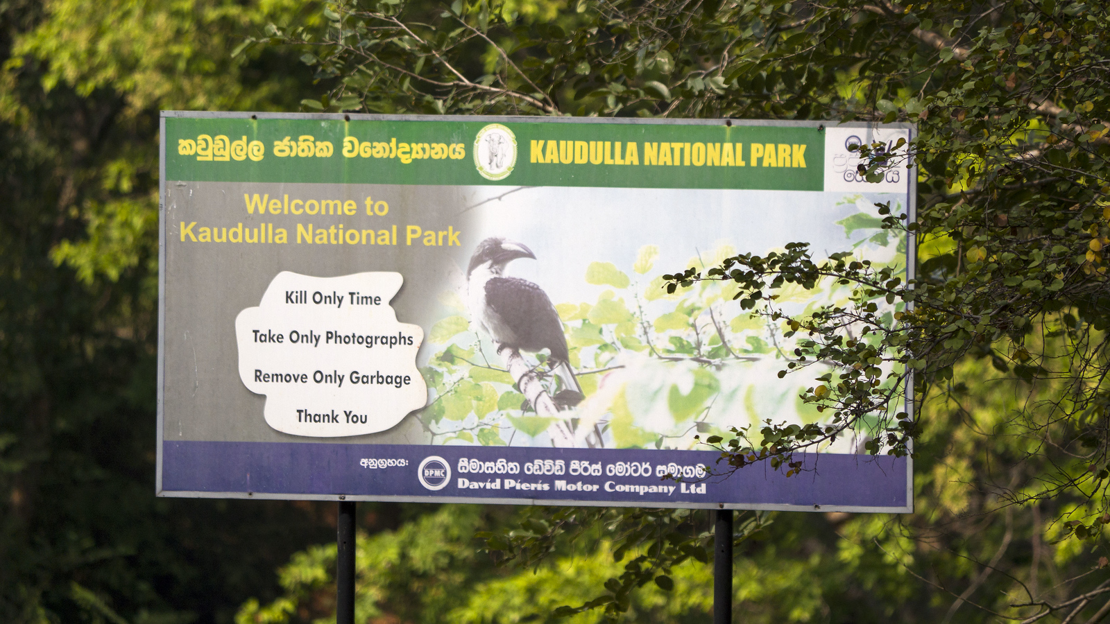 Kaudulla National Park - See Elephants in Sri Lanka