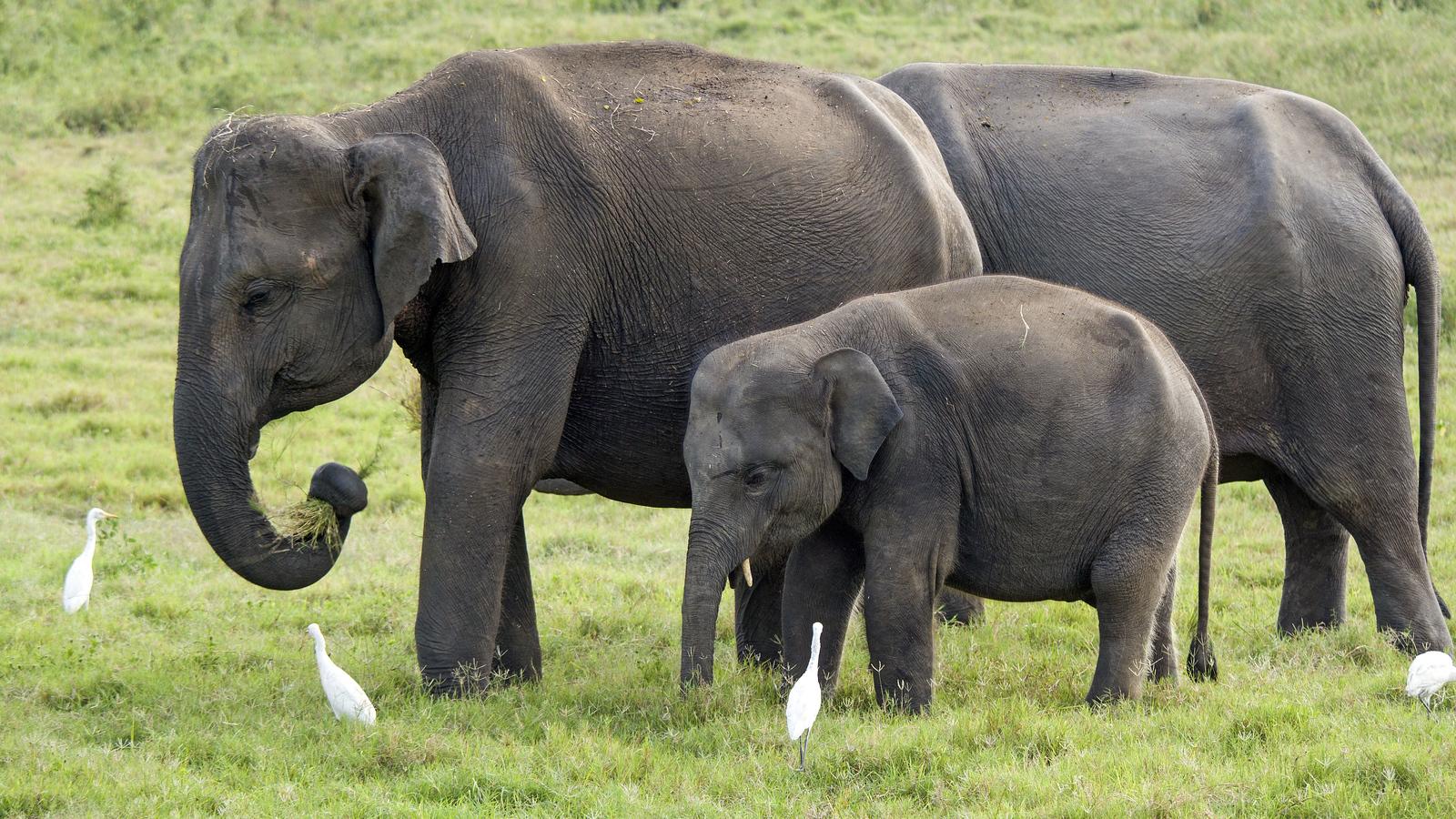 Kaudulla National Park - See Elephants in Sri Lanka