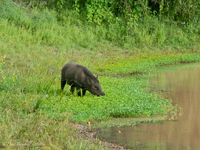 Yala National Park near Tissa, Sri Lanka