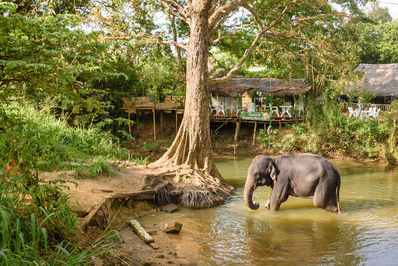 Elephant Outside the Restaurant