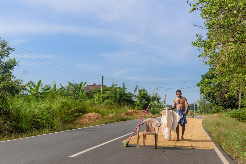 Drying Rice on the Road