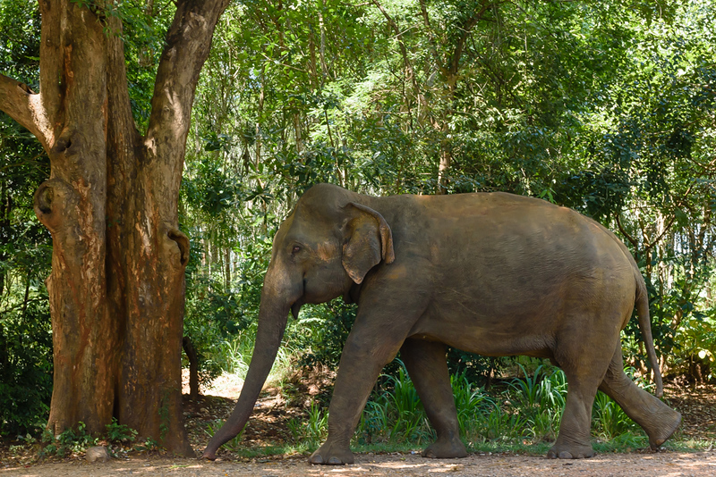 Wild Elephant on the Side of the Road