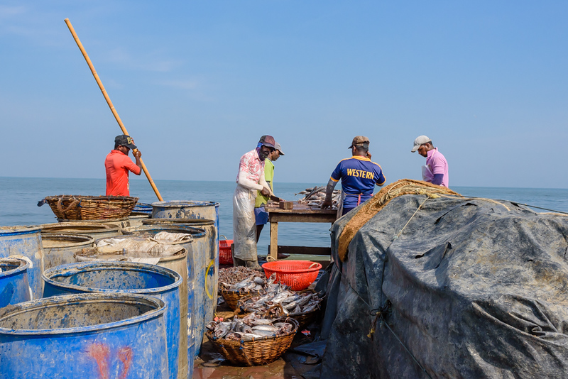 Sorting the Fish