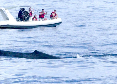 This is how close the small boat got to the whale. Not safe for both parties.