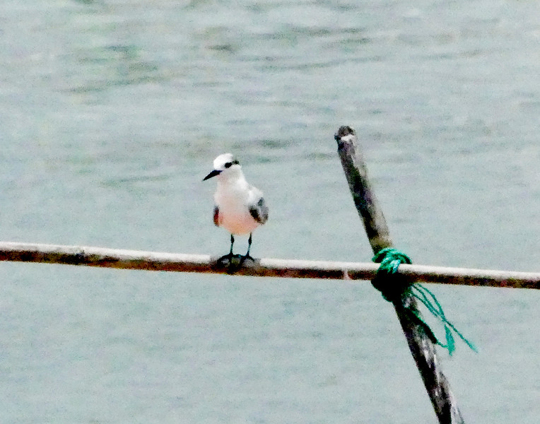 Tern- the only birds we saw on the tip.