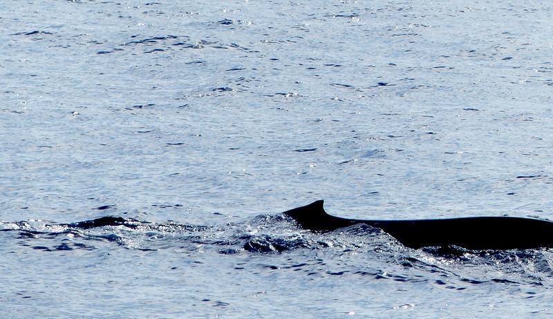 Whale surfacing again.