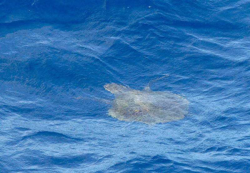Small turtle seen.
