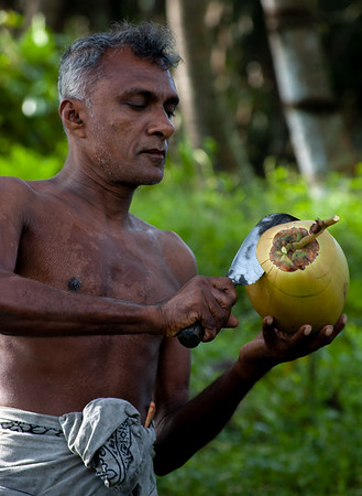"""Opening a """"King Coconut"""" for drinking, Sri Lanka 2007"""