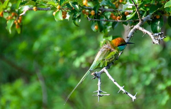 Bird, Yala National Park, Sri Lanka, 2013