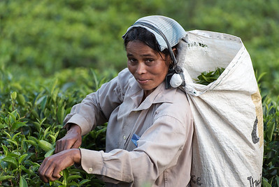 Tea Picker, Ella