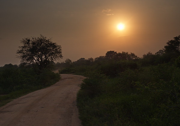 End of the safari