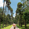 Palm Avenue at Botanical Garden in Peradeniya