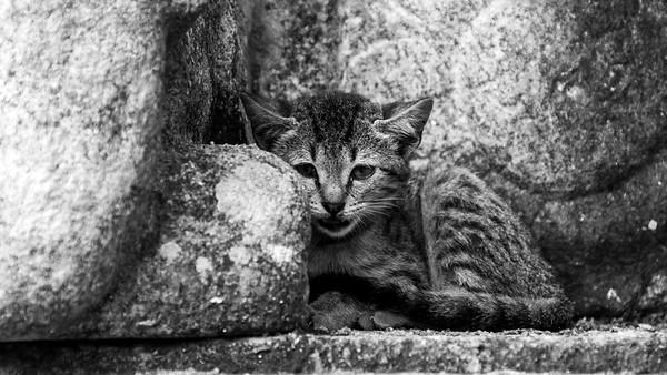 Little cat against the ancient rocks at Jetavanarama, Sri Lanka, 2013