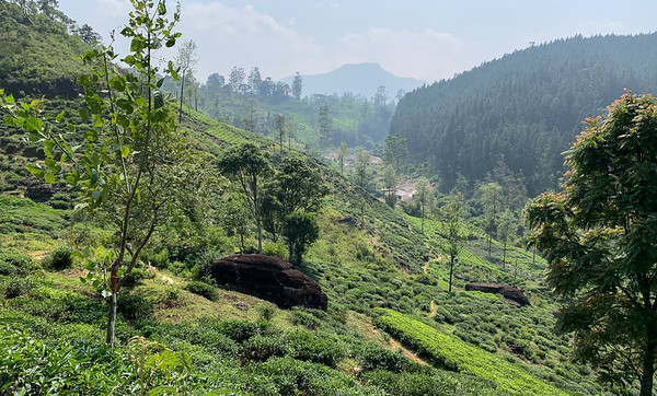 Tea plantations near Ginigathena Pass, Sri Lanka