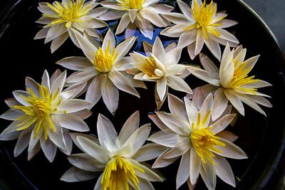 Flower Tray, Tissamaharama