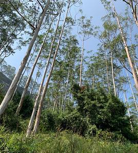 Trees near Nallathanniya, Sri Lanka