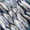Fish Market in Mirissa Harbour