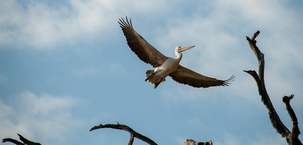Stork, Yala National Park, Sri Lanka, 2013
