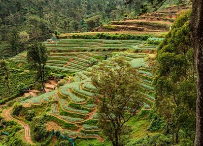 Sri Lanka - Terraced Agriculture