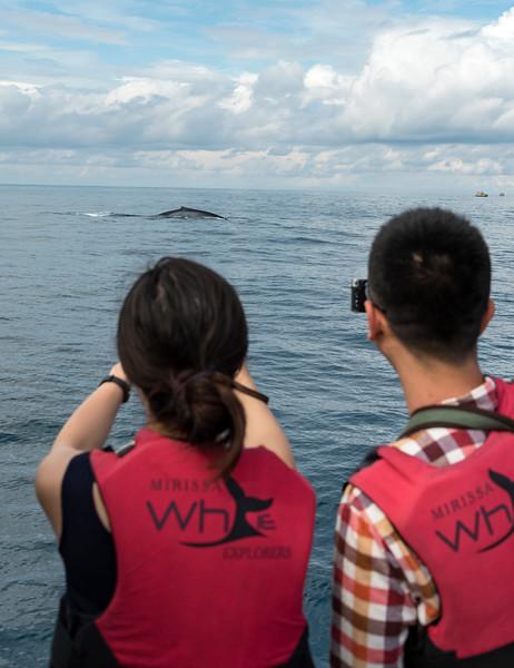 Whale Watching, Mirissa, Sri Lanka