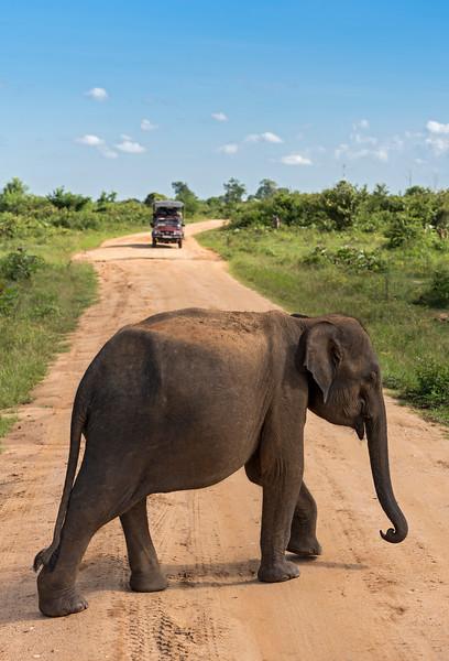 4WD and Elephant, Udawalawe National Park