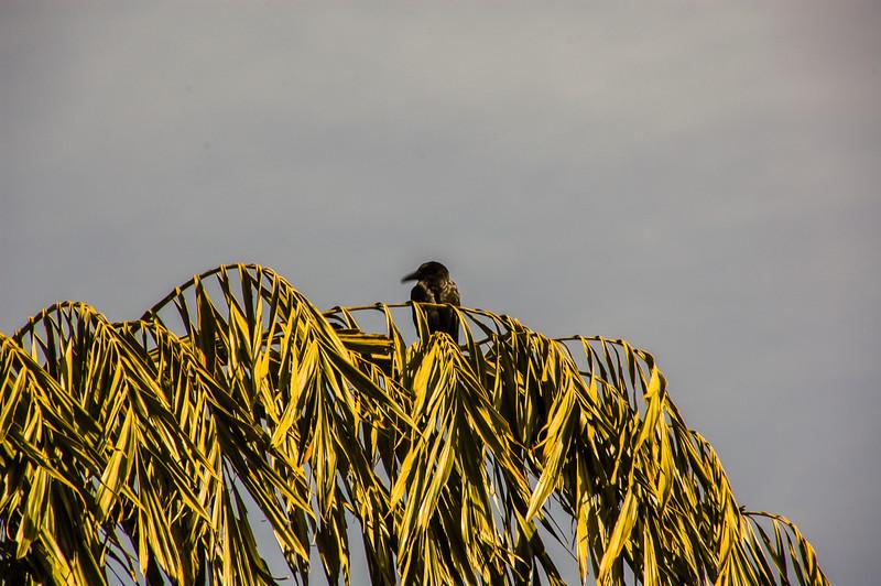 Birds at Tea Trails, Sri Lanka