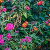 Tea Trails Flora
