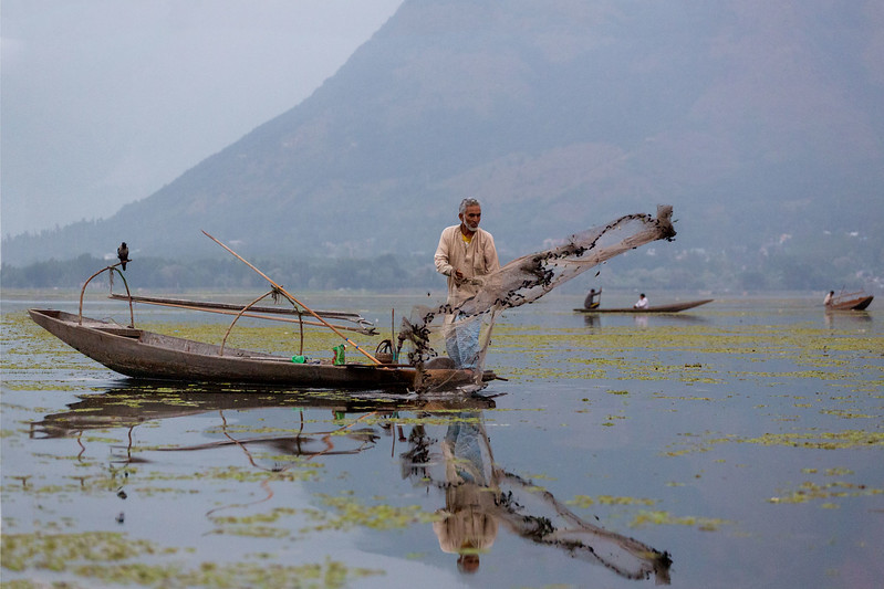 Casting the net. Dal Lake.