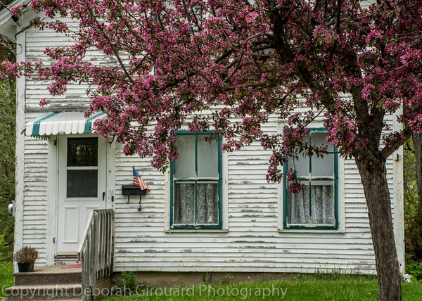 My neighbor's house and crabapple tree