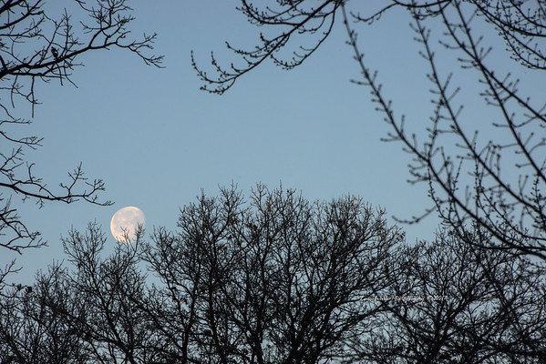 Setting Moon and Trees St. Croix Falls