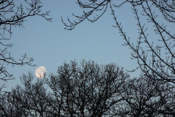Setting Moon and Trees St. Croix Falls