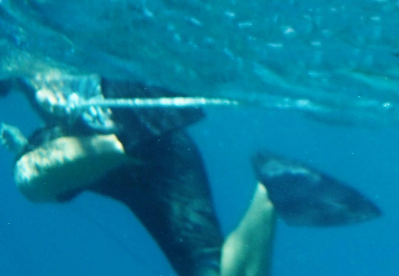 Snorkeling the Buck Island Reef