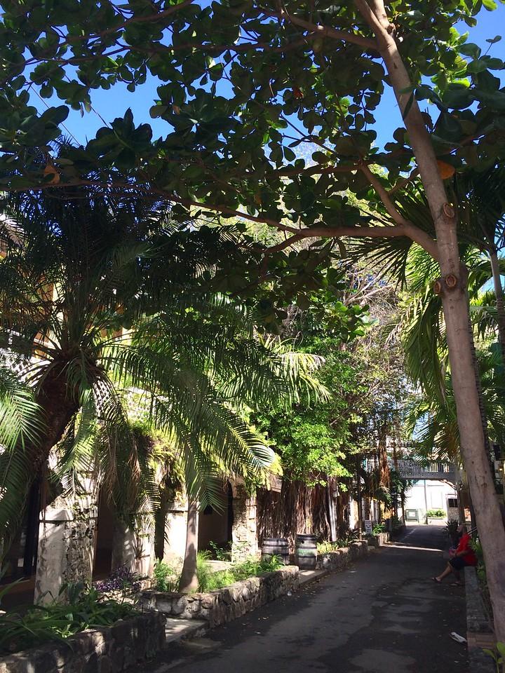 Tropical Town