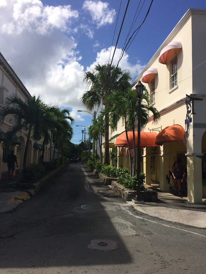 Palm Lined Street
