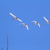 "St. Croix National Scenic Riverway: JJ, 16 - ""A Pack of Swans"""