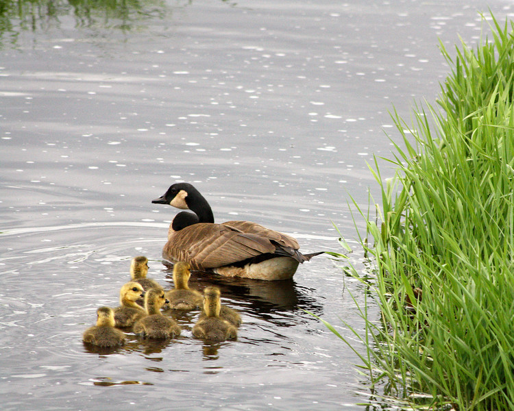 """St. Croix National Scenic Riverway: Bobby, 14 - """"Loving Mother"""""""