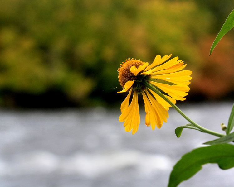 """Flower on the River""  by Diamonte, 16 