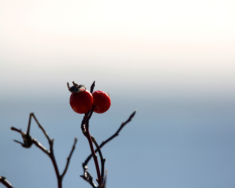 "St. Croix National Scenic Riverway: Ronnie, 16 - ""Winter Berries"""