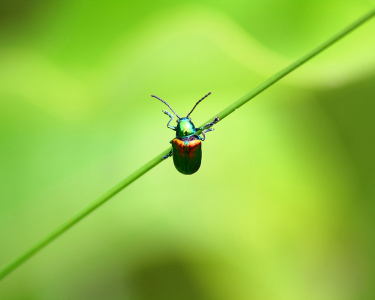 """The Green Beetle"" by Jourdyn, 17 