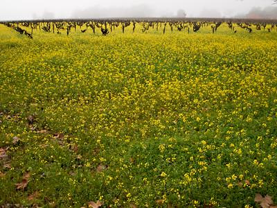 St. Helena Mustard-1174761.jpg