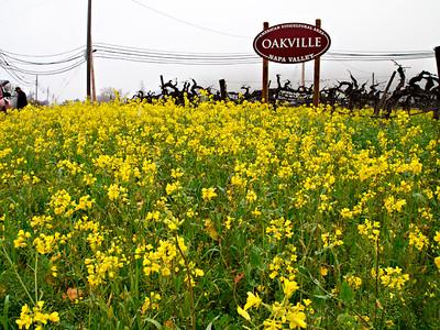 St. Helena Mustard-1174751.jpg