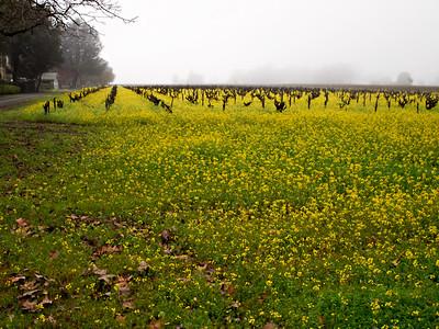 St. Helena Mustard-1174760.jpg