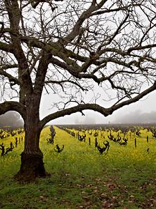St. Helena Mustard-1174765.jpg