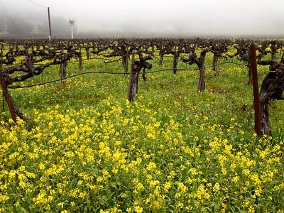 St. Helena Mustard-1174754.jpg