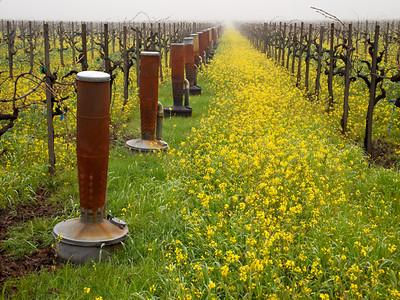 St. Helena Mustard-1174758.jpg